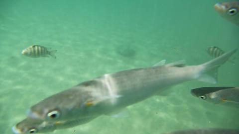 Underwater life Stock Video Footage