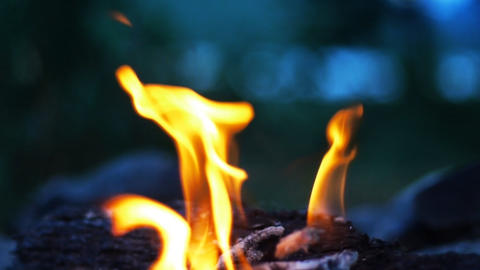 Bonfire  In  Wilderness   HD   LOOP stock footage
