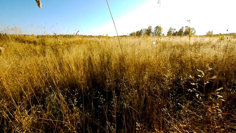 Fly over grass Stock Video Footage