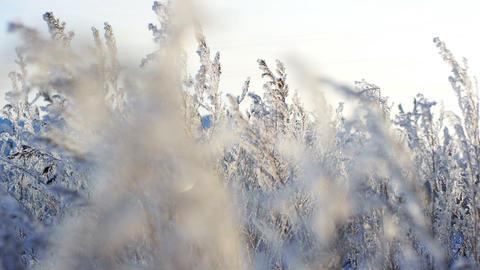 Frozen plants 2 Stock Video Footage