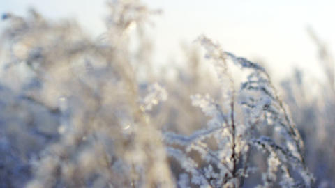 Frozen plants 2 Animation