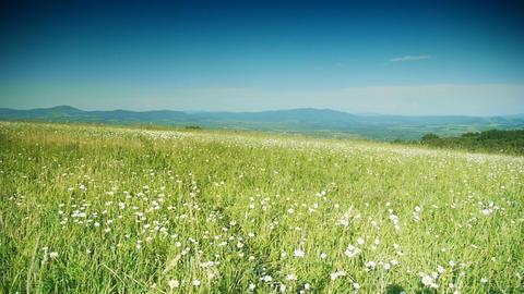 Grassy hills 4 Stock Video Footage