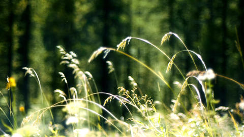 Soft focus grass Stock Video Footage