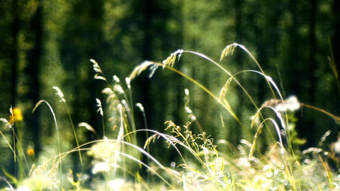 Soft Focus Grass stock footage