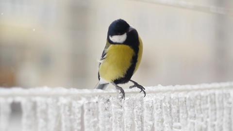 Winter birds 003 Stock Video Footage