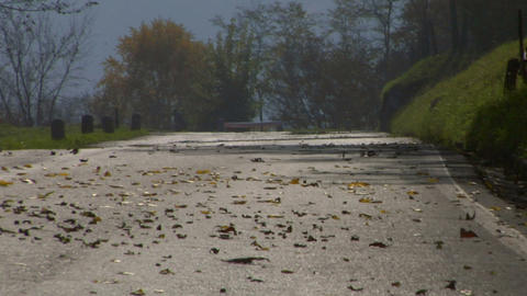 road fall leaves 01 Stock Video Footage