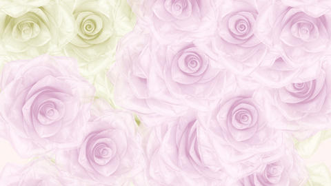 Big pink and white rose buds fall down, loop bg Stock Video Footage