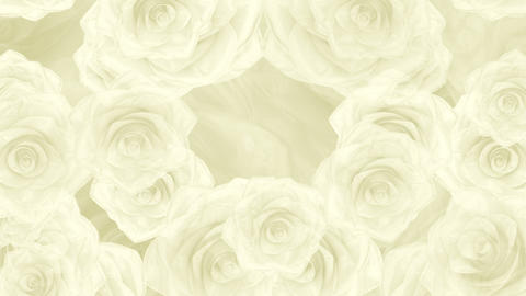 Big white rose buds fall down, loop background Animation