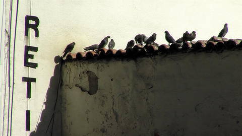 Groups Of Pigeons On The Roof Of An Old House In La Paz (Bolivia) GIF
