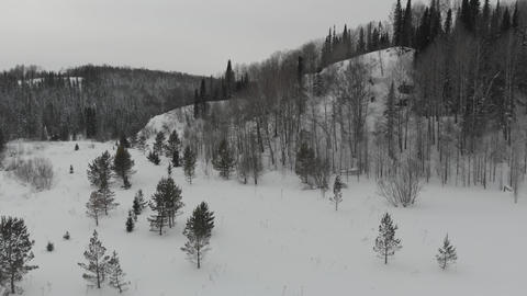 Aerial view of the taiga forests of pine trees.Siberian taiga.Winter forest with Footage