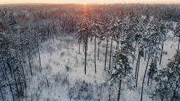 Aerial photo of a winter forest. flying over the snowy forests of the sun sets Footage