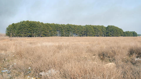 Panorama of the landscape of steppe and forest, Ukraine, Kherson region Archivo