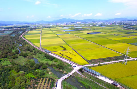 Aerial View of Cosmos Road and Rice Paddy Painting in Mujeom village, Changwon, Photo