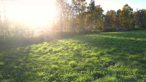 aerial view green meadow and sun rays from behind trees Footage