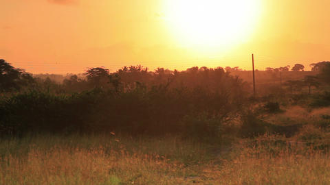 Sunset over a field in Kenya Footage