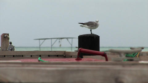 Seagull sitting on a post by the sea Footage