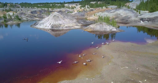 aerial abandoned pit ecosystem comes to life birds fly above Footage