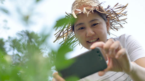 Asian farmer at sunset in a garden taking photo of plant by a smart phone camera Footage