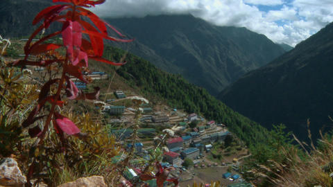 White flowers in the wind on the slopes above Namche Bazaar in Nepal Footage
