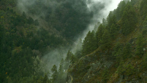 Clouds moving up a forested mountainside Footage