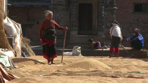 Women raking grain in Nepal Footage