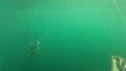 Underwater Dolphins Close Up Footage