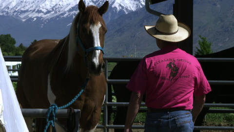 Slow motion handheld shot of a cowboy approaching and touching a skewbald horse Footage