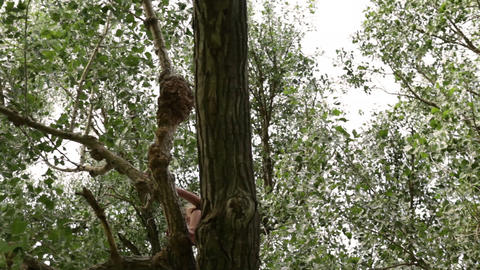A shot of a young boy climbing a tall tree Footage