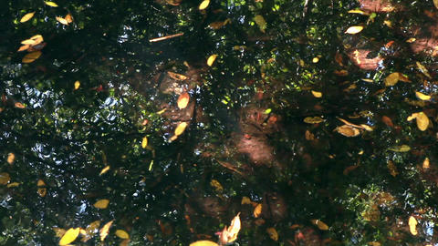 Slow, downward pan of water in a bright, swampy area with leaves and reflections Footage