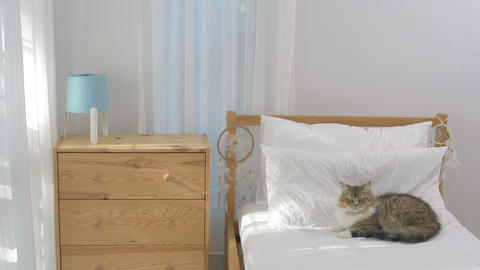 4K Persian cat laying down on clean and simply bedroom with sunlight Footage