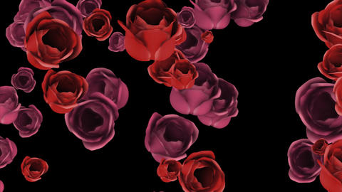 Falling pink and red roses with alpha channel Animation