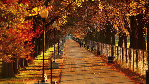 Static shot of a tree-lined walkway at the National Mall along the reflecting po Footage