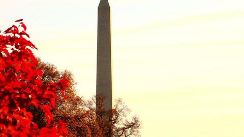 Tilt shot of Washington Monument in Washington DC Live Action