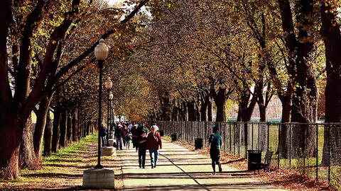 Shot of tree-lined walkway where many people pass, at the National Mall in Washi Footage