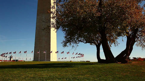 Panning shot of Washington Monument and a big tree in Washington DC Footage