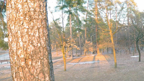 A long panorama of the spring park on the outskirts of the forest with tall Footage