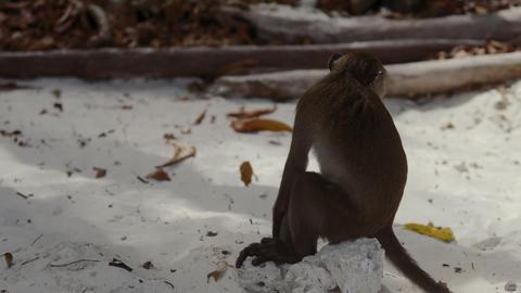 monkey on tropical island beach Stock Video Footage