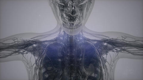 3D magnetic resonance image scan Live Action