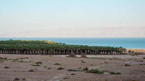 Time lapse of shadows covering palm tree grove near Sea of Galilee Footage
