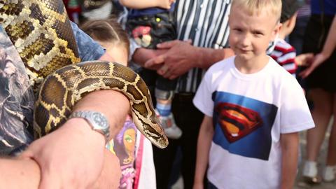 Huge snake Python at the hands of man Live Action