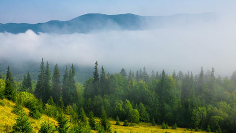 Misty Morning in the Mountains Archivo
