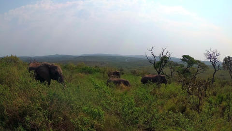 A group of elephants prowling in the wildness of the... Stock Video Footage