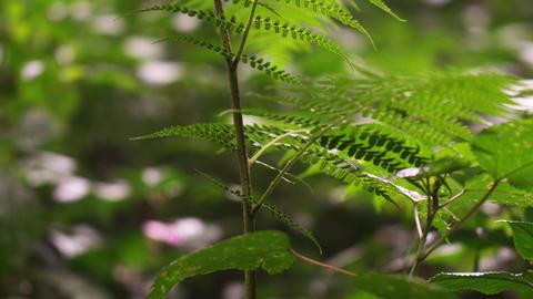 Close up racking focus footage of leaves on plants Footage