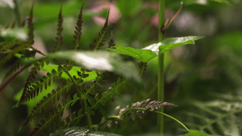 Close up racking focus footage of undisturbed plants Footage