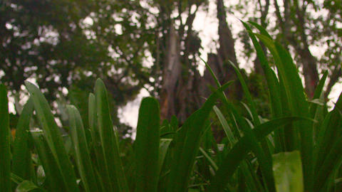 Low-angle tracking of tree canopy Stock Video Footage