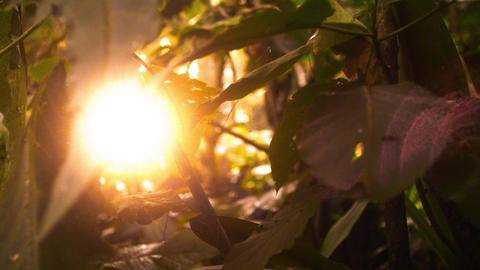Slow track sun through forest leaves Footage