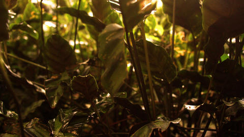 Tracking footage of undergrowth in shadow Footage