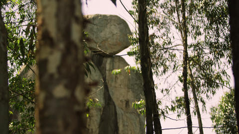 Racking focus footage of tree and stone stack Footage