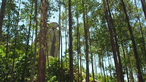 Hillside trees, tall stone Footage