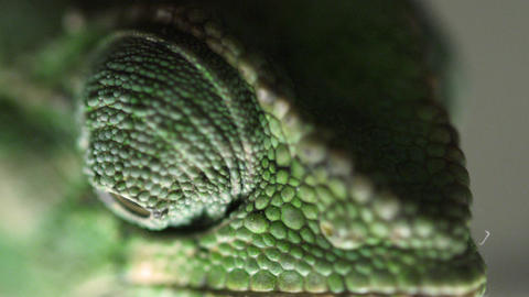 Extreme close up of a chameleon's eyes moving independently Footage